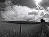 Fenced Cloud.<br />  Egehøj på stien mellem Ladby og Herlufsholm Næstved. Denmark.