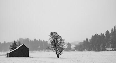 Palouse Snowstorm
