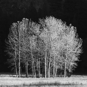 Silhouette of Valley Trees - Yosemite, California