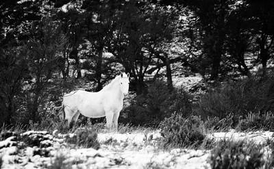 Wild Horse - Patagonia, Chile