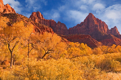 Autumn cottonwoods and rabbit brush near the Virgin River frame the Watchman Formation, Zion National Park