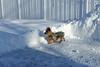 160123-BlizzardJonas-012