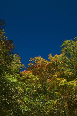 Blue Creek Foliage, oct 2009