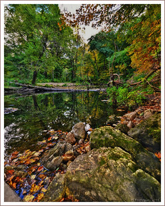 Transition  Taken on September 25th in Backbone State Park.....the changing of the seasons.