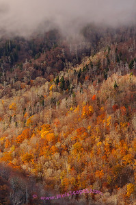 The Newfound Gap area of the Great Smokey Mountain National Park.