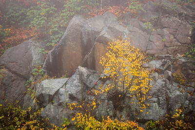 Autumn on the Rocks II