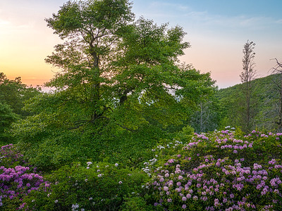 Floral Sunset at Black Rock Hill View, Blue Ridge Parkway