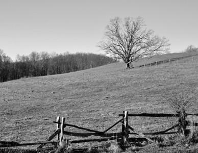 Blue Ridge Parkway - NC