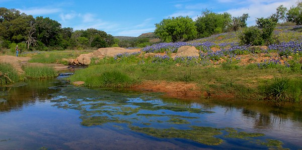 azBluebonnets, April 7, 2016 126A, Willow City Loop near Fredericksburg, Tx -126