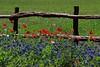 Wildseed farm, Fredericksburg, Tx.