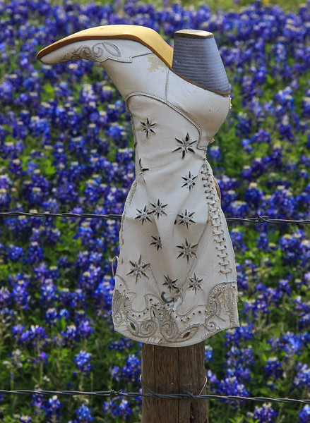 azBluebonnets, April 7, 2016 083A, Fence cap, Texas style-083