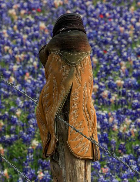 aazBluebonnets, April 7, 2016 085A, Fence cap, Texas style-085