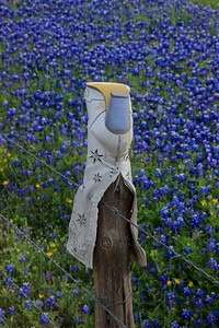 Fence was tall and a small stepladder was used to gain the Bluebonnet background.