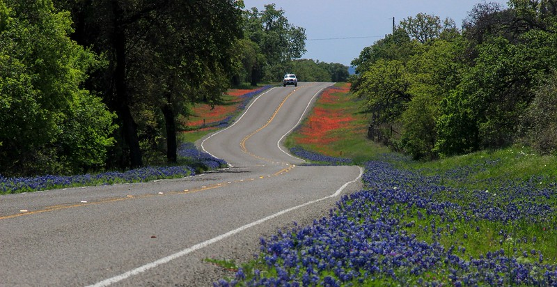 Well kept roads with no shoulders bring the flowers right up to you and provide a pleasing touch to the compositions.