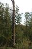 boom met kabouterstoeltjes