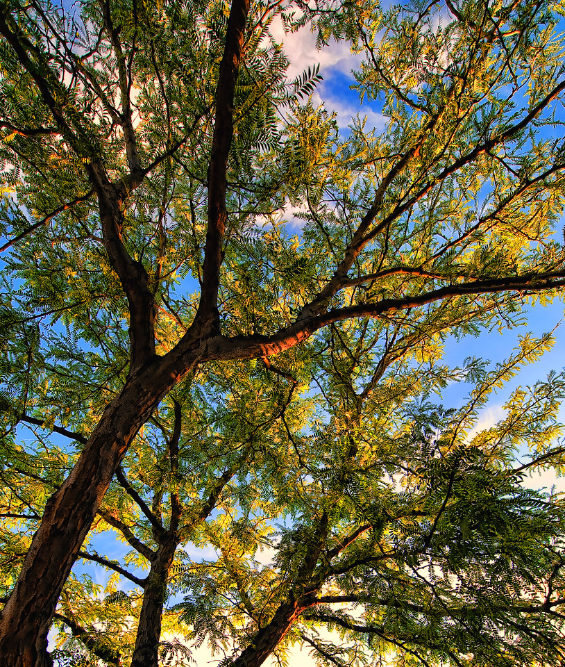 Trees at Boise Centry on the Grove Boise Idaho. Photo by Mike Reid, All Outdoor Photography.