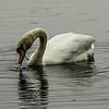 Bolam Lake near Belsay, Northumberland