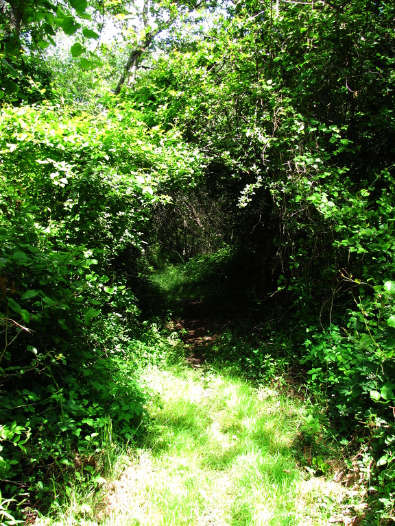 Peddocks Island trails