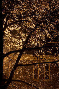 After the Ice Storm-0432