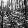32  G Trail Up Sun BW V