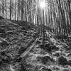 30  G Trail Up Sun BW V