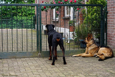 My bodyguards