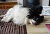 Zondagmorgen, Loulou is vast van plan uit te slapen