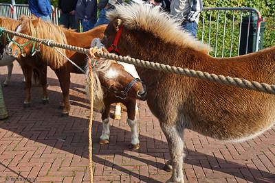 Ponymarkt Brakel