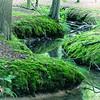 Buggenhout bos