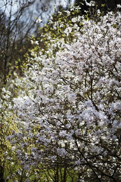 stangalard vallon brest magnolia