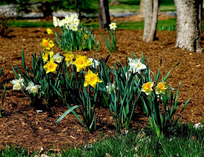 Early spring flowers in backyard 2006