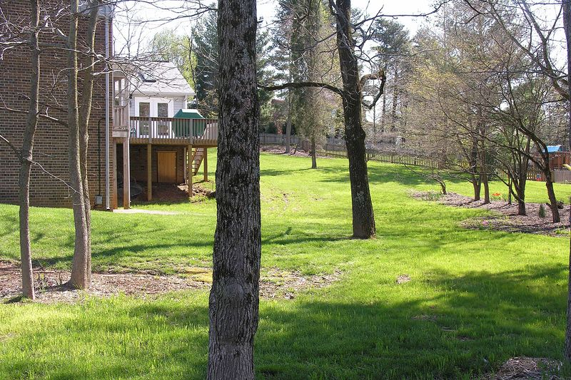 April 3 2005 Back yard
