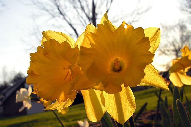 March 31 2005 flowers in yard