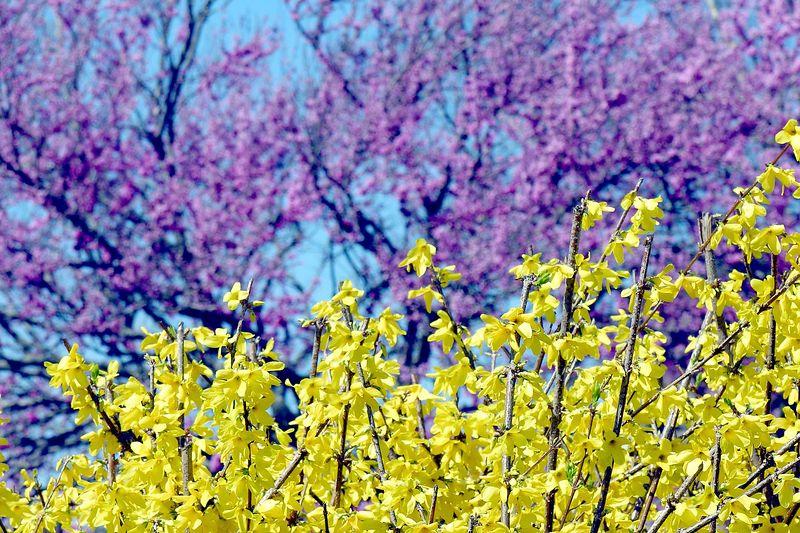 April 3 2005 Neighbor's pretty colors