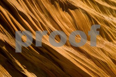 Woodgrain of the Bristlecone Pine-1