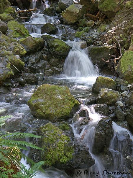 Lupin Creek