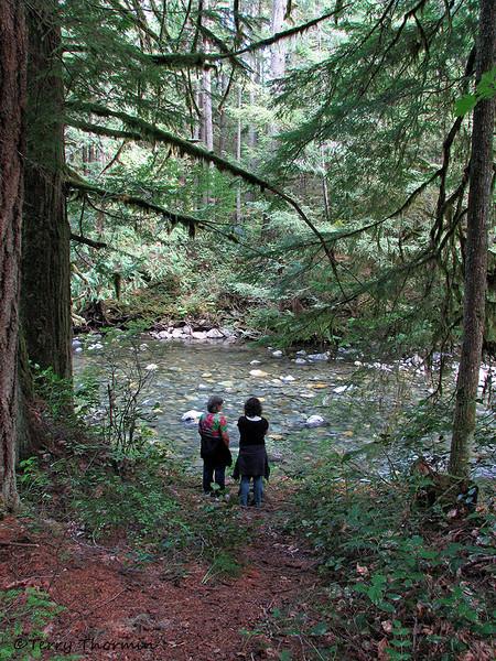 Watching the River Runs, Little Qualicum River Park, B.C.