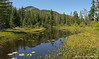 9 km. Bog on way up to Mount Washington, Vancouver Island