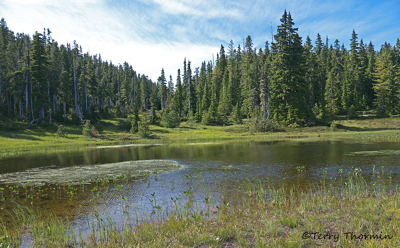 Pond in Paradise Meadows