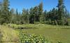 Little River Pond, west pond