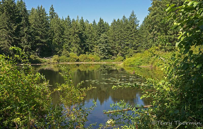 Maple Lake, Courtenay, Vancouver Island