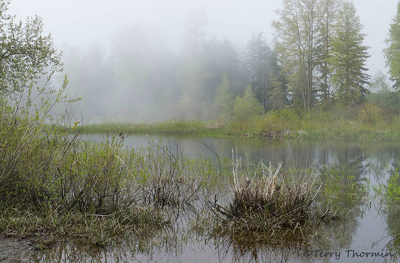 Little River Pond in the fog