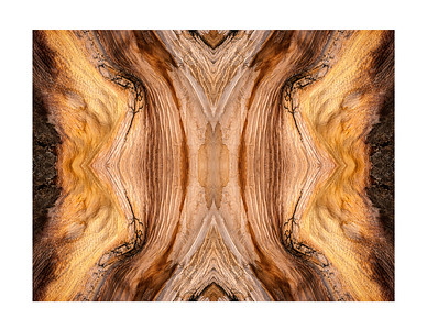 Bristlecone Abstract 7853