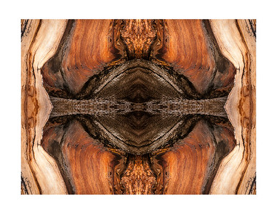 Bristlecone Abstract 7734