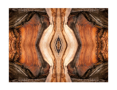 Bristlecone Abstract 7732