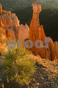 Thors Hammer, Bryce Canyon National Park, Utah