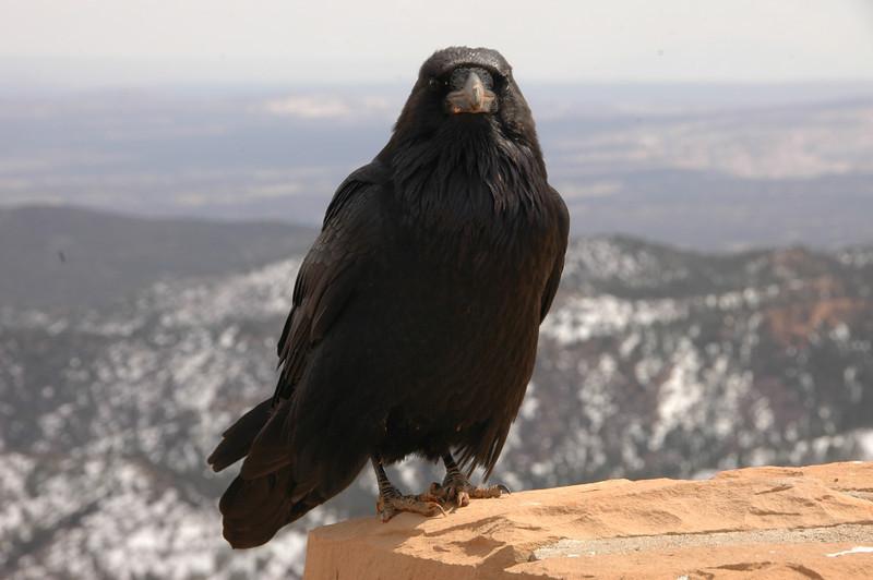 Utah-0855