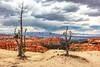 139.  Bryce Canyon National Park Summer Monsoons