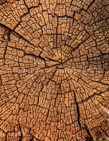158.  Wood Maze