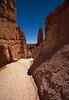 Bryce Trail 2